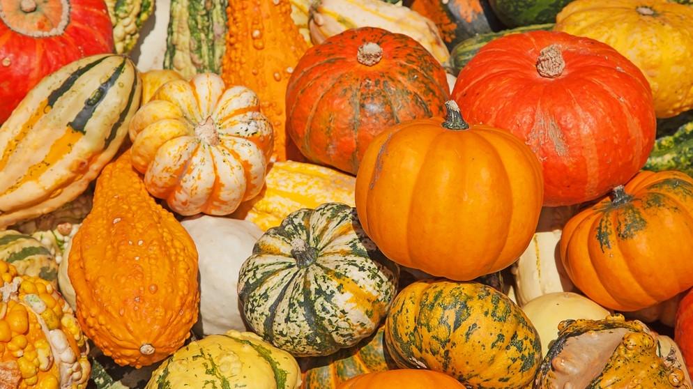 Herbst – Kürbiszeit …